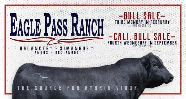 Geldings wallachebig valley ranch country club